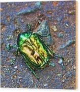 Green Junebug Wood Print