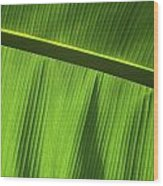 Green Leaf, Close-up Wood Print