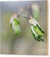 Green Leaf In Spring Wood Print