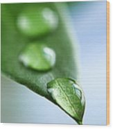 Green Leaf With Water Drops Wood Print