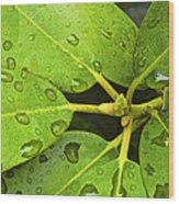 Green Leaves With Water Droplets Wood Print