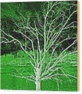 Green Magic Tree Wood Print