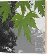 Green Maple Leaves Wood Print
