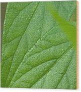 Green Nature Wood Print