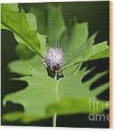 Green Oak Leaf And Flower Wood Print