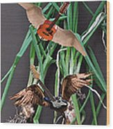 Green Onions Wood Print by Eric Kempson