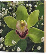 Green Orchid In Baby's Breath Wood Print