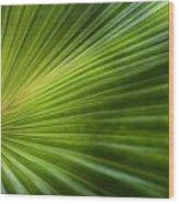 Green Palm Wood Print by Al Hurley