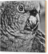 Green Parrot - Bw Wood Print