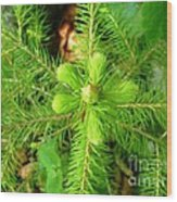 Green Pine Needles 2 Wood Print