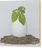 Green Plant Wood Print