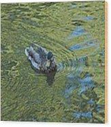 Green Pool Wood Print