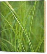 Green Prairie Grass Wood Print