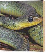 Green Racer Chironius Exoletus Wood Print
