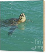 Green Sea Turtle 4 Wood Print