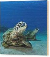 Green Sea Turtle Couple Wood Print
