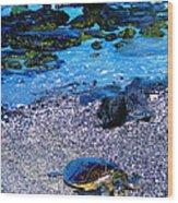 Green Sea Turtle Honu Wood Print