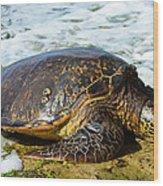 Green Sea Turtle Of Hawaii Wood Print