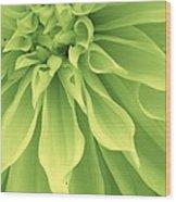 Green Sherbet Wood Print