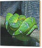 Green Snake Wood Print
