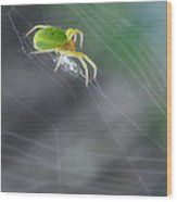 Green Spider 1.0 Wood Print
