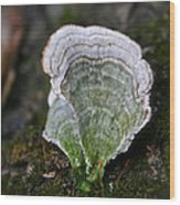 Green Turkey Tails Wood Print