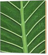 Green Veiny Leaf 1 Wood Print
