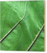 Green Veiny Leaf 2 Wood Print
