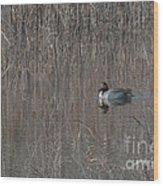 Green-winged Teal Wood Print