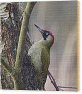 Green Woodpecker Wood Print