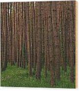 Greening In The Woods Wood Print