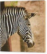 Grevys Zebra Wood Print