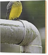 Grey-capped Flycatcher Wood Print