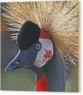 Grey-crowned Crane Wood Print