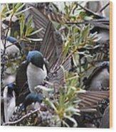 Grey Feathers - Tree Swallow Wood Print