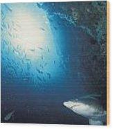 Grey Nurse Shark Turning Away From Reef Wood Print