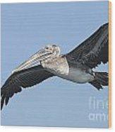 Grey Pelican Wood Print