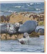 Grey Seals Wood Print