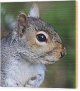 Grey Squirrel Wood Print by Colin Varndell