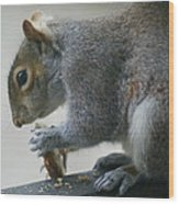 Grey Squirrel Dining Out Wood Print