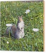 Grey Squirrel Wood Print by Georgette Douwma