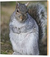 Grey Squirrel Sitting On The Ground Wood Print