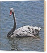 Grey Swan Wood Print