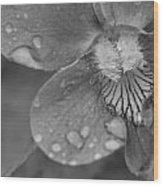 Grey Violet Wood Print