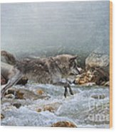 Grey Wolf Jumping Over A Mountain Stream Wood Print