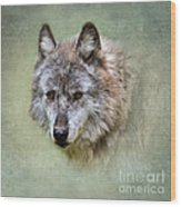 Grey Wolf Portrait Wood Print