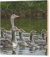 Greylag Goose Anser Anser Couple Wood Print