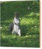 Greynolds Park Squirrel Wood Print