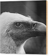 Griffon Vulture Wood Print