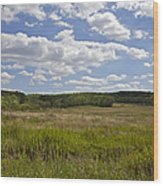 Griggstown Native Grassland Preserve Wood Print by David Letts